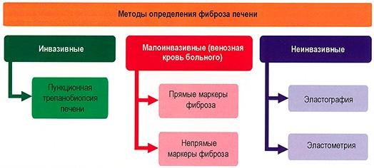 Методы определения фиброза печени