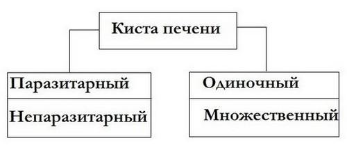 Классификация кисты печени
