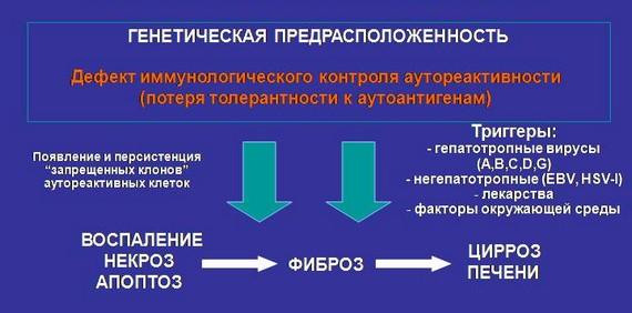 Схема патогенеза аутоиммунного гепатита