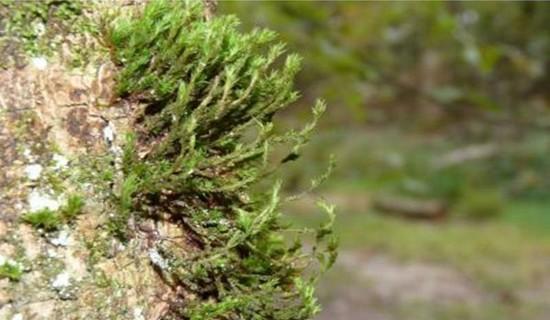 Панкреатит лечение в домашних условиях травами