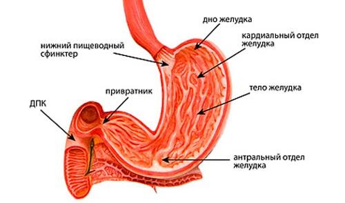 Очаговая атрофия слизистой антрального отдела желудка